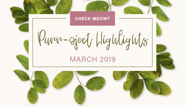 CHECK MEOWT! Purroject Highlights March 2019